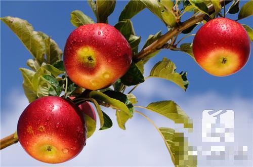 苹果补什么