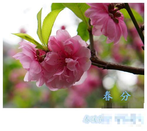春分节气如何养生?春分养生小知识