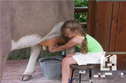 吃牛初乳有什么好处