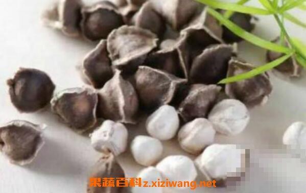 辣木籽和辣木叶的区别
