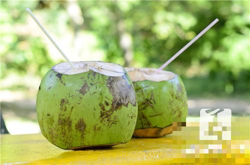怎样吃椰子