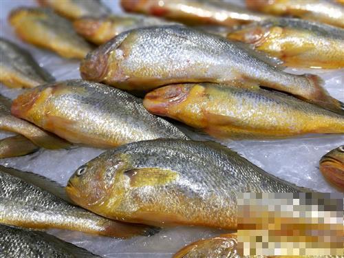吃黄花鱼有5大好处,但这种黄花鱼别买也别吃