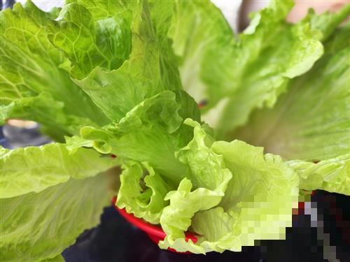 夏季养生要多吃这几种蔬菜
