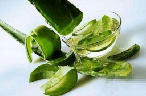 芦荟汁液的功效与作用
