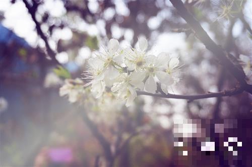 春分养生应该怎么做?春分节气养生指南