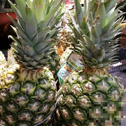 台湾凤梨是不是菠萝?二者有什么区别?